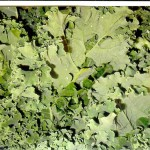 Health Hazards of Kale?
