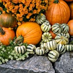 Beauty Powers of Pumpkins
