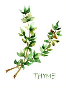Thyme for Health and Beauty